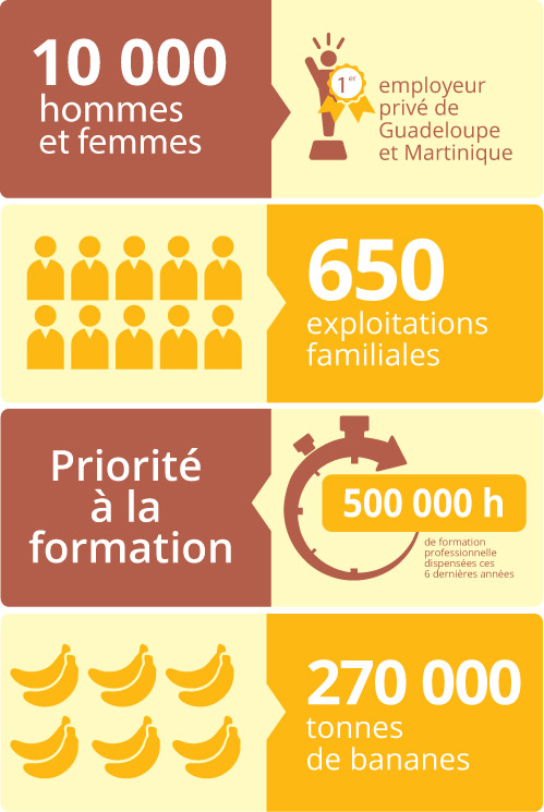 infographieanne-vertical