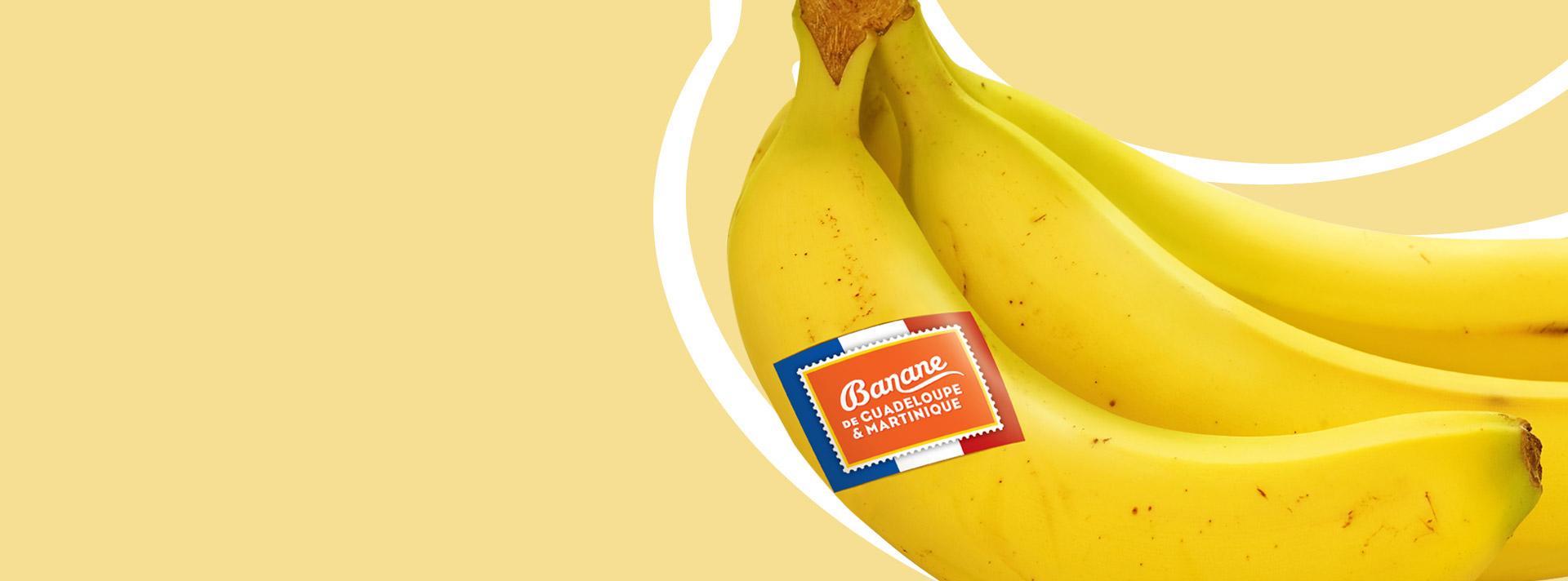 slide-banane-planteur-2-1
