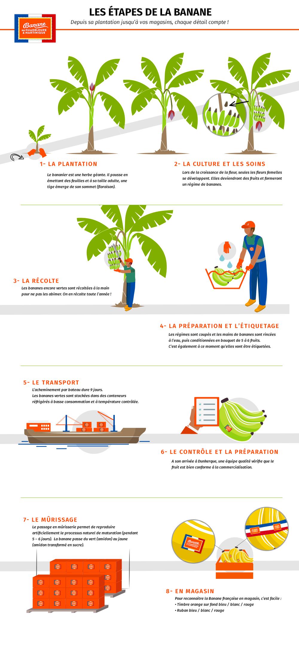 infographie culture BGM