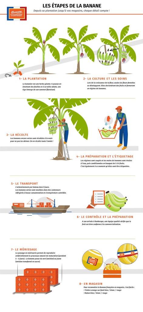 infographie - culture de la banane