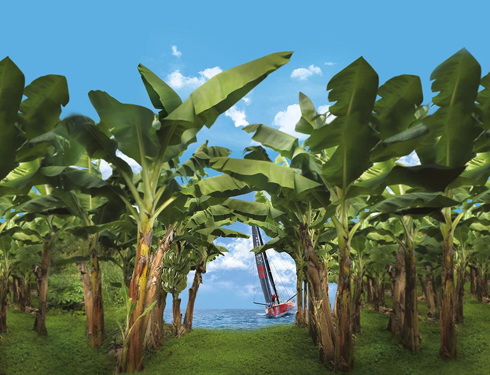 IMOCA au fond de la bananeraie